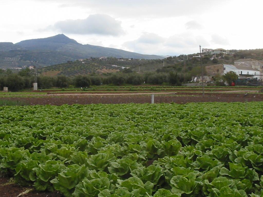 Paisaje agrario 2-1